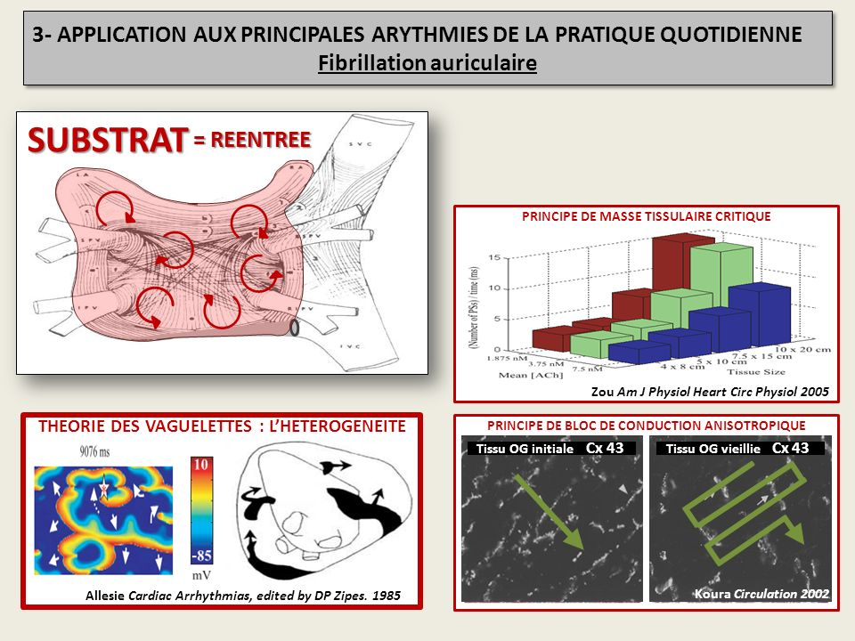 SUBSTRAT = REENTREE PRINCIPE DE MASSE TISSULAIRE CRITIQUE Zou Am J Physiol Heart Circ Physiol 2005 PRINCIPE DE BLOC DE CONDUCTION ANATOMIQUE TémoinFib