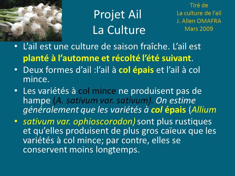 Projet Ail La Culture Tiré de La culture de lail J. Allen OMAFRA Mars 2009 Lail est une culture de saison fraîche. Lail est planté à lautomne et récol