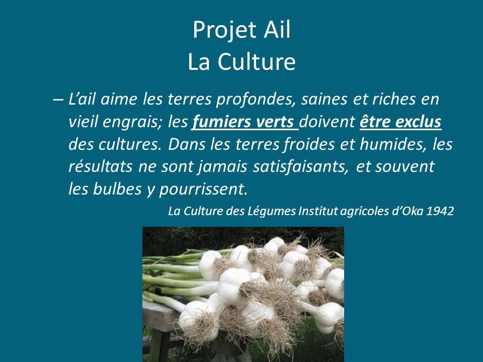 Projet Ail La Culture – Lail aime les terres profondes, saines et riches en vieil engrais; les fumiers verts doivent être exclus des cultures. Dans le