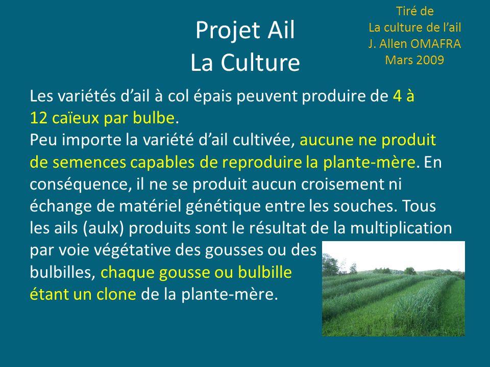 Projet Ail La Culture Tiré de La culture de lail J. Allen OMAFRA Mars 2009 Les variétés dail à col épais peuvent produire de 4 à 12 caïeux par bulbe.