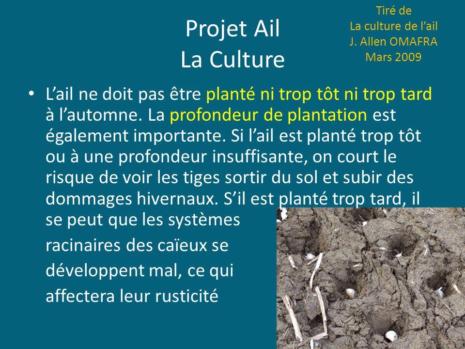 Projet Ail La Culture Tiré de La culture de lail J. Allen OMAFRA Mars 2009 Lail ne doit pas être planté ni trop tôt ni trop tard à lautomne. La profon