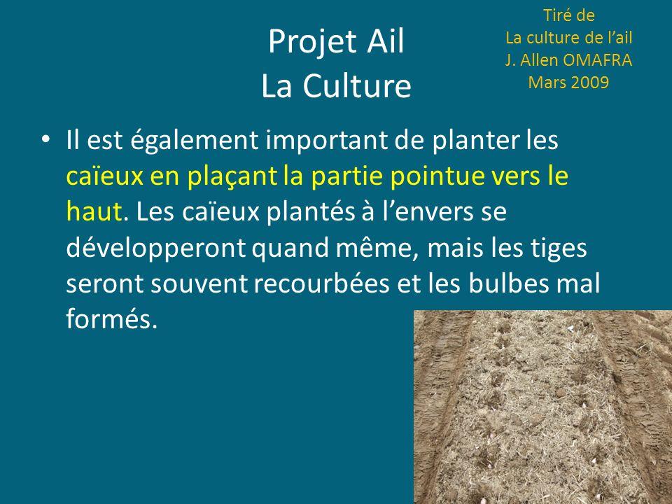 Projet Ail La Culture Il est également important de planter les caïeux en plaçant la partie pointue vers le haut. Les caïeux plantés à lenvers se déve