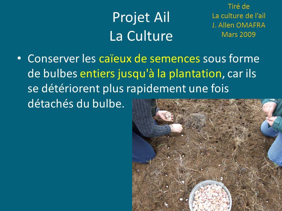 Projet Ail La Culture Conserver les caïeux de semences sous forme de bulbes entiers jusqu'à la plantation, car ils se détériorent plus rapidement une