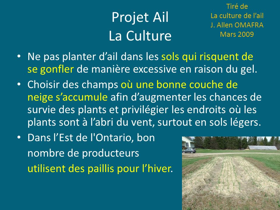 Projet Ail La Culture Tiré de La culture de lail J. Allen OMAFRA Mars 2009 Ne pas planter dail dans les sols qui risquent de se gonfler de manière exc