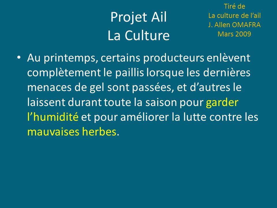 Projet Ail La Culture Au printemps, certains producteurs enlèvent complètement le paillis lorsque les dernières menaces de gel sont passées, et dautre