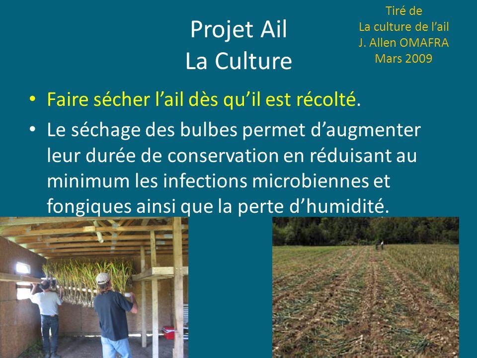 Projet Ail La Culture Faire sécher lail dès quil est récolté. Le séchage des bulbes permet daugmenter leur durée de conservation en réduisant au minim