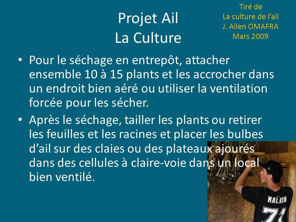 Projet Ail La Culture Tiré de La culture de lail J. Allen OMAFRA Mars 2009 Pour le séchage en entrepôt, attacher ensemble 10 à 15 plants et les accroc