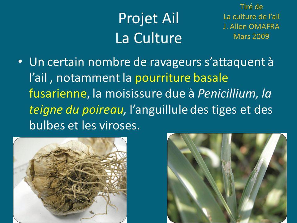 Projet Ail La Culture Un certain nombre de ravageurs sattaquent à lail, notamment la pourriture basale fusarienne, la moisissure due à Penicillium, la