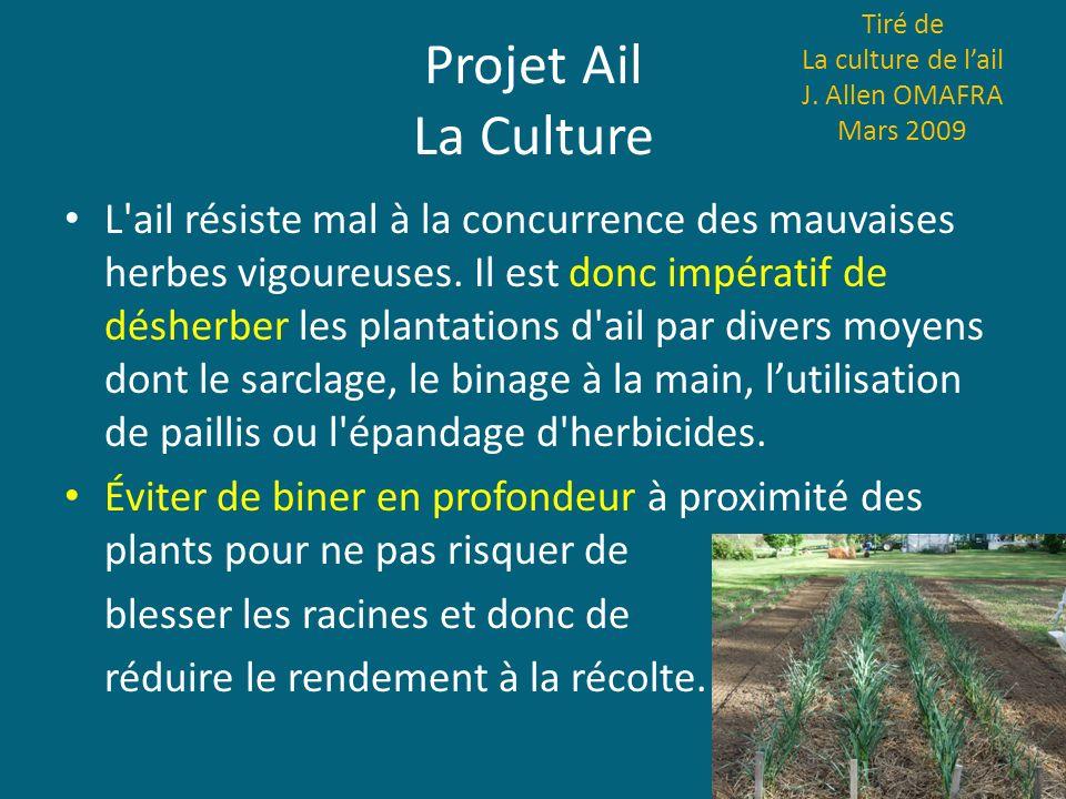 Projet Ail La Culture L'ail résiste mal à la concurrence des mauvaises herbes vigoureuses. Il est donc impératif de désherber les plantations d'ail pa