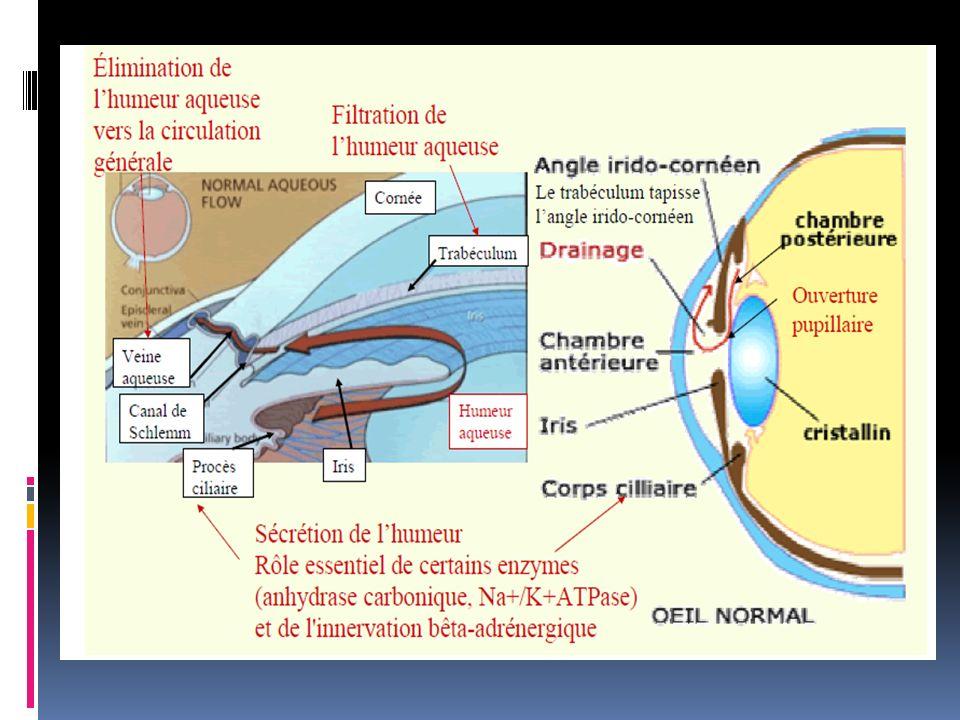 But: normaliser la PIO Moyens thérapeutiques: Médicaux: collyres hypotonisants Physiques: laser argon trabéculaire Chirurgicaux: trabéculectomie