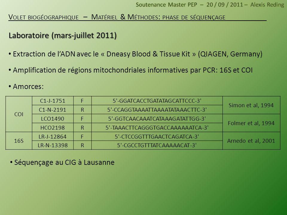 Extraction de lADN avec le « Dneasy Blood & Tissue Kit » (QIAGEN, Germany) Amplification de régions mitochondriales informatives par PCR: 16S et COI A