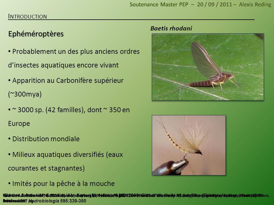 Dinocras cephalotes Nemoura dubitans Apparition contemporaine aux Ephéméroptères (~300 mya) ~ 3500 sp.