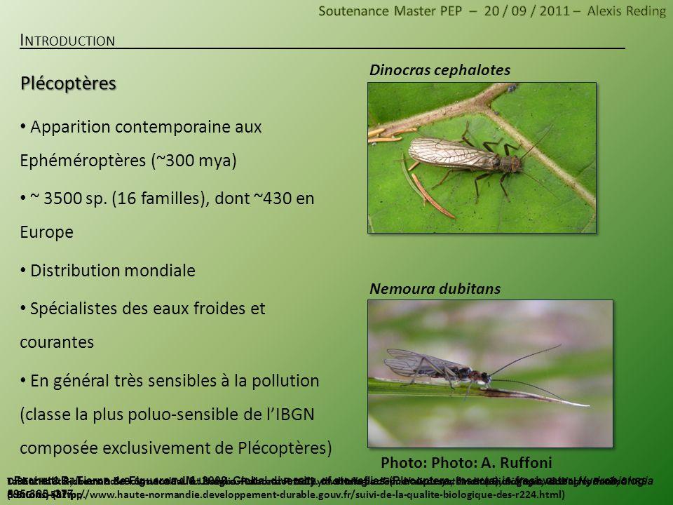Dinocras cephalotes Nemoura dubitans Apparition contemporaine aux Ephéméroptères (~300 mya) ~ 3500 sp. (16 familles), dont ~430 en Europe Distribution
