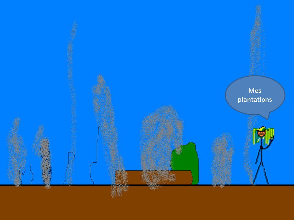 Mes plantations