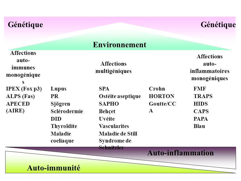 Auto-immunité Auto-inflammation Affections auto- immunes monogénique s Affections multigéniques Affections auto- inflammatoires monogéniques IPEX (Fox