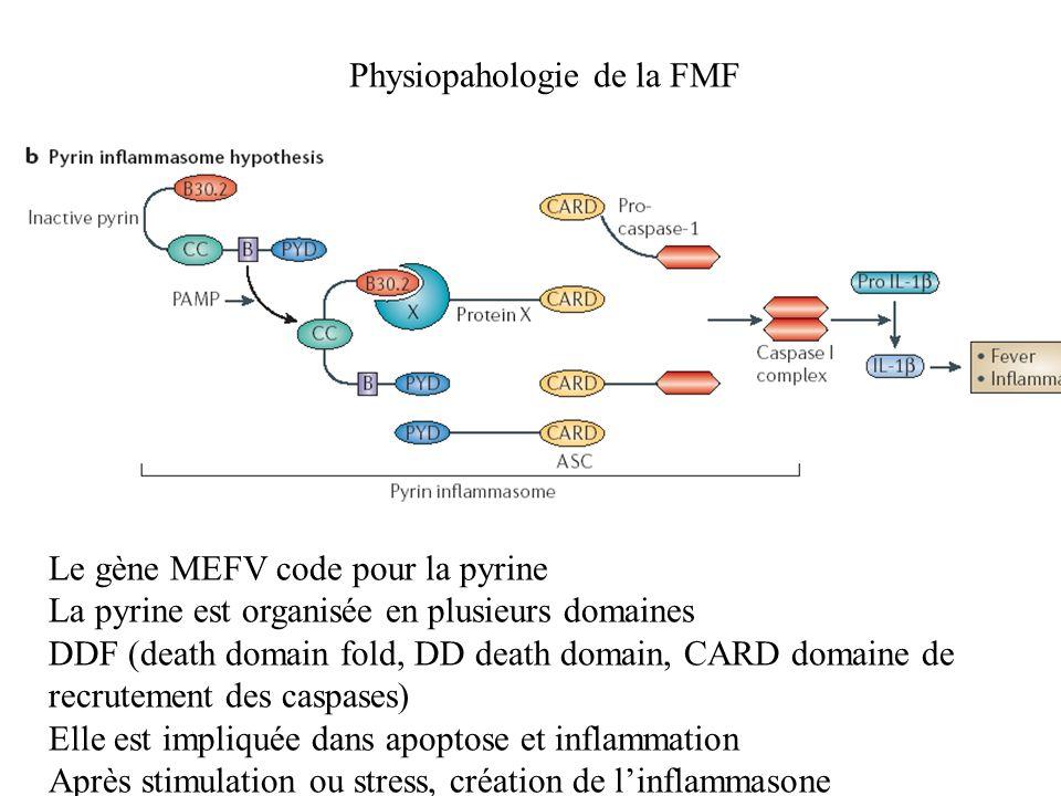 Physiopahologie de la FMF Le gène MEFV code pour la pyrine La pyrine est organisée en plusieurs domaines DDF (death domain fold, DD death domain, CARD