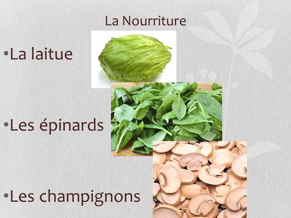 La Nourriture La laitue Les épinards Les champignons