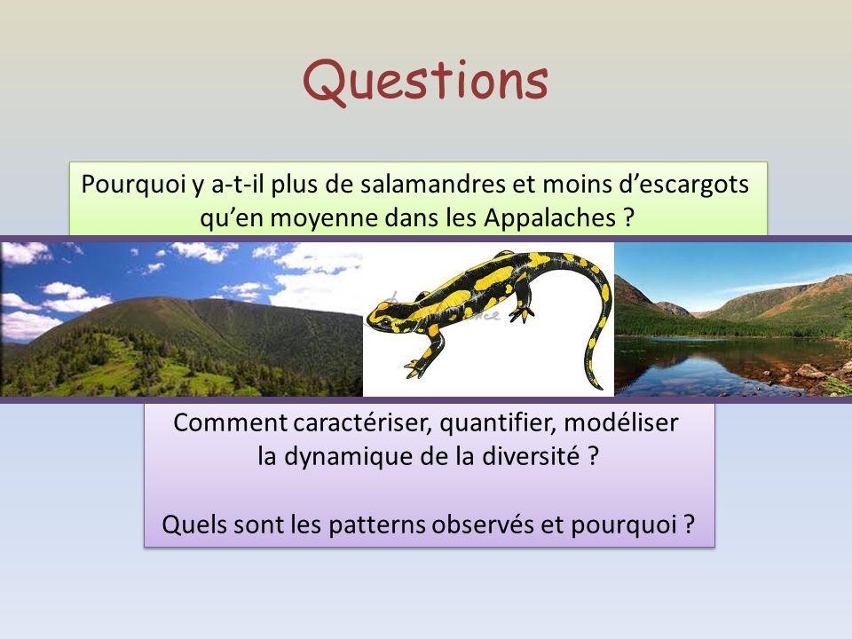 Questions Pourquoi y a-t-il plus de salamandres et moins descargots quen moyenne dans les Appalaches ? Pourquoi y a-t-il plus de salamandres et moins
