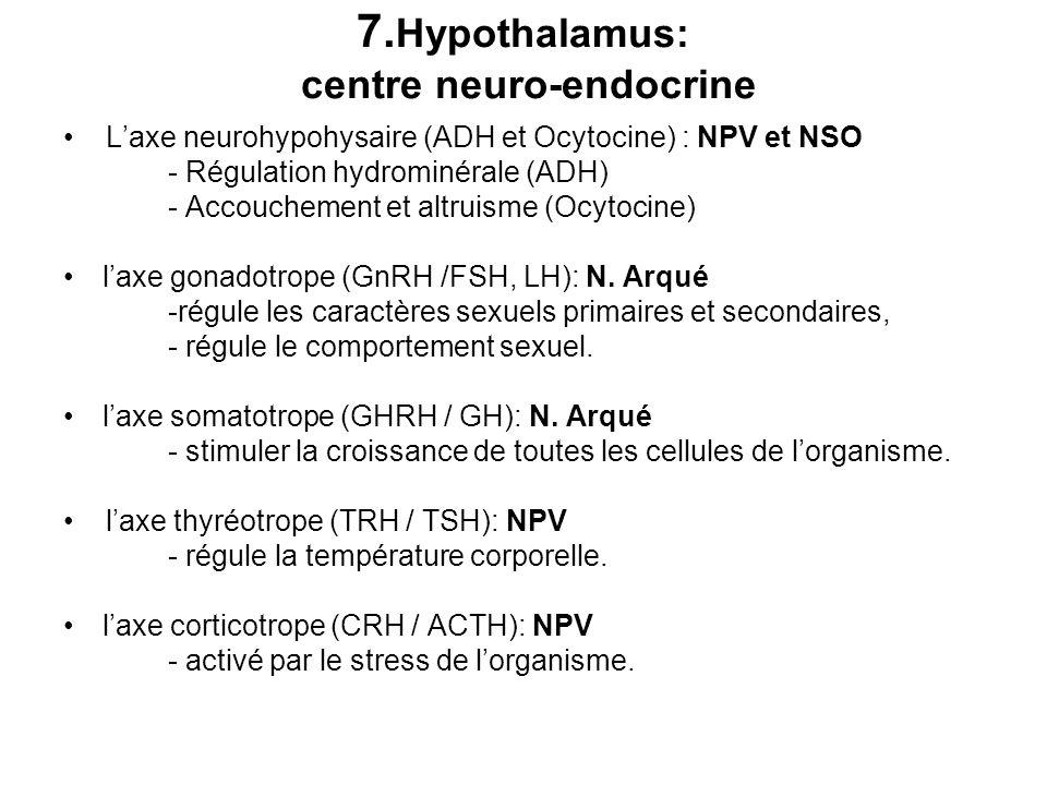 7. Hypothalamus: centre neuro-endocrine Laxe neurohypohysaire (ADH et Ocytocine) : NPV et NSO - Régulation hydrominérale (ADH) - Accouchement et altru