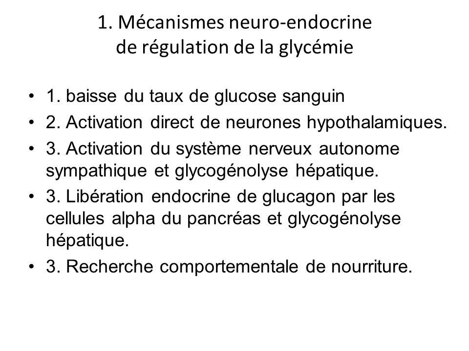 1. Mécanismes neuro-endocrine de régulation de la glycémie 1. baisse du taux de glucose sanguin 2. Activation direct de neurones hypothalamiques. 3. A