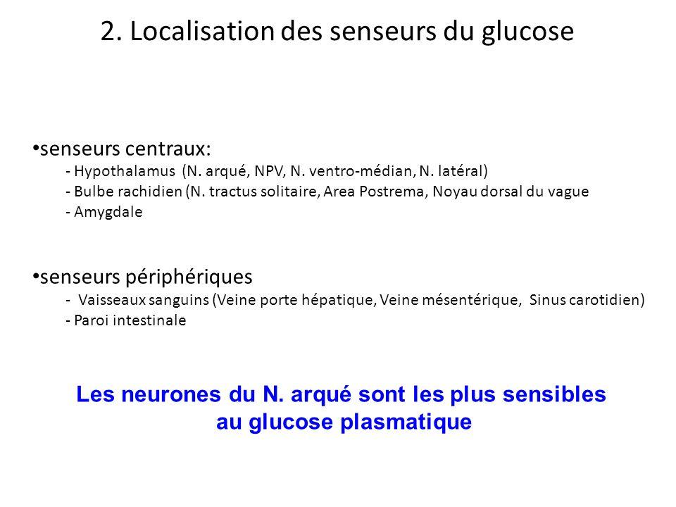 senseurs centraux: - Hypothalamus (N. arqué, NPV, N. ventro-médian, N. latéral) - Bulbe rachidien (N. tractus solitaire, Area Postrema, Noyau dorsal d