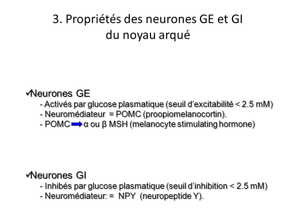 3. Propriétés des neurones GE et GI du noyau arqué Neurones GE Neurones GE - Activés par glucose plasmatique (seuil dexcitabilité < 2.5 mM) - Neuroméd