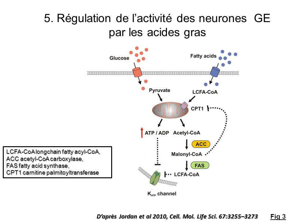 Daprès Jordan et al 2010, Cell. Mol. Life Sci. 67:3255–3273 5. Régulation de lactivité des neurones GE par les acides gras Fig 3 LCFA-CoA longchain fa