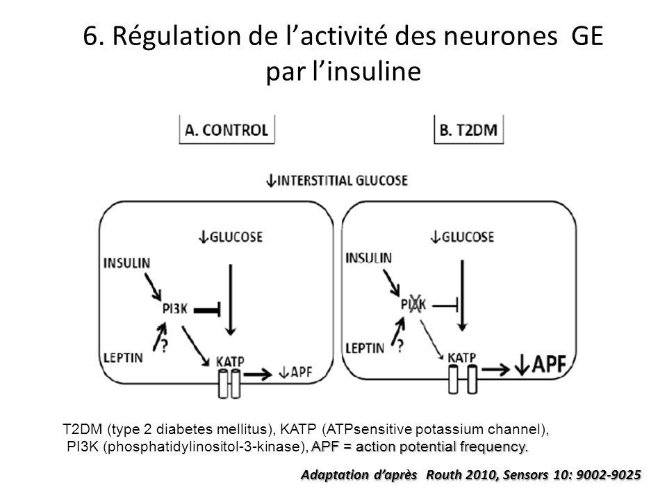 6. Régulation de lactivité des neurones GE par linsuline T2DM (type 2 diabetes mellitus), KATP (ATPsensitive potassium channel), APF = action potentia