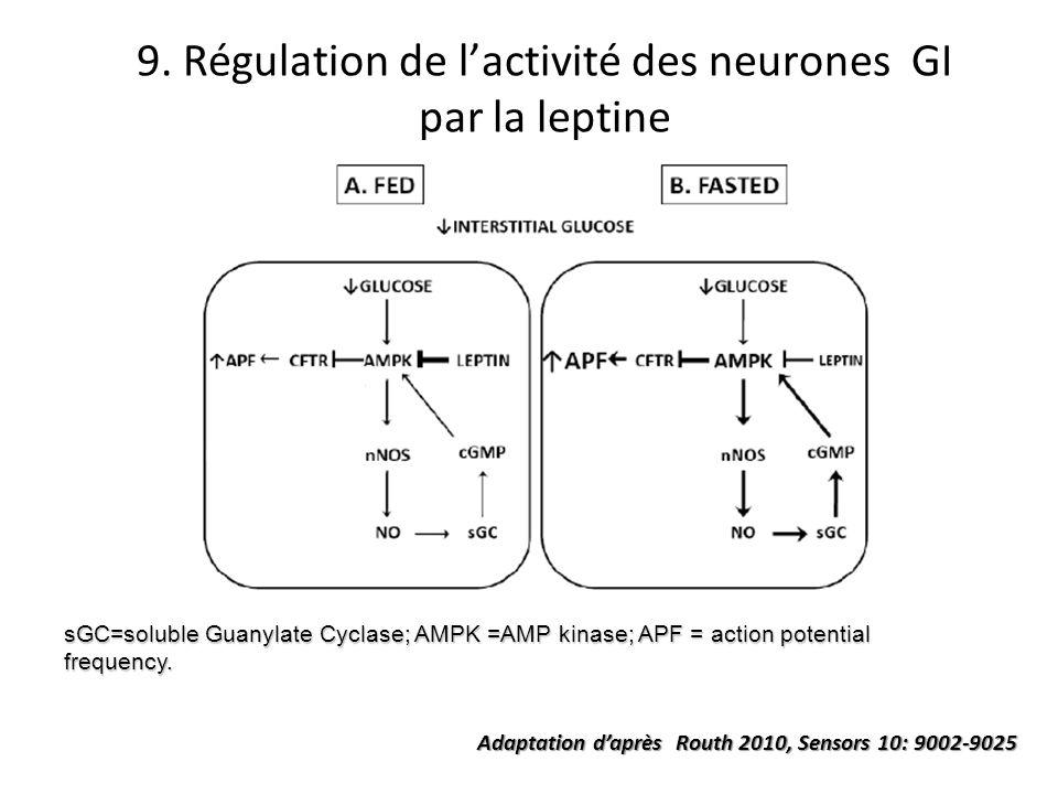 9. Régulation de lactivité des neurones GI par la leptine sGC=soluble Guanylate Cyclase; AMPK =AMP kinase; APF = action potential frequency. Adaptatio