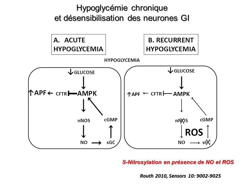 Hypoglycémie chronique et désensibilisation des neurones GI Routh 2010, Sensors 10: 9002-9025 S-Nitrosylation en présence de NO et ROS