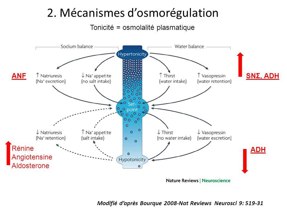 2. Mécanismes dosmorégulation Modifié daprès Bourque 2008-Nat Reviews Neurosci 9: 519-31 Tonicité = osmolalité plasmatique ANF Rénine Angiotensine Ald