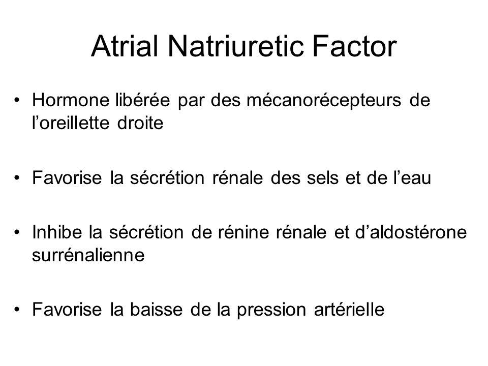 Atrial Natriuretic Factor Hormone libérée par des mécanorécepteurs de loreillette droite Favorise la sécrétion rénale des sels et de leau Inhibe la sé