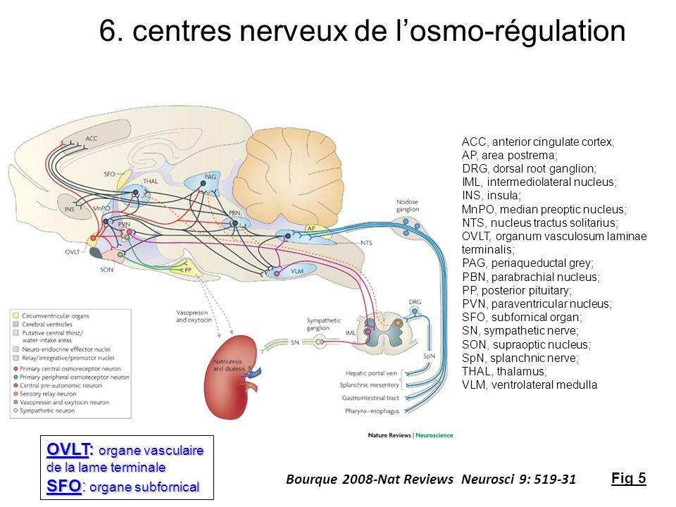 Bourque 2008-Nat Reviews Neurosci 9: 519-31 ACC, anterior cingulate cortex; AP, area postrema; DRG, dorsal root ganglion; IML, intermediolateral nucle