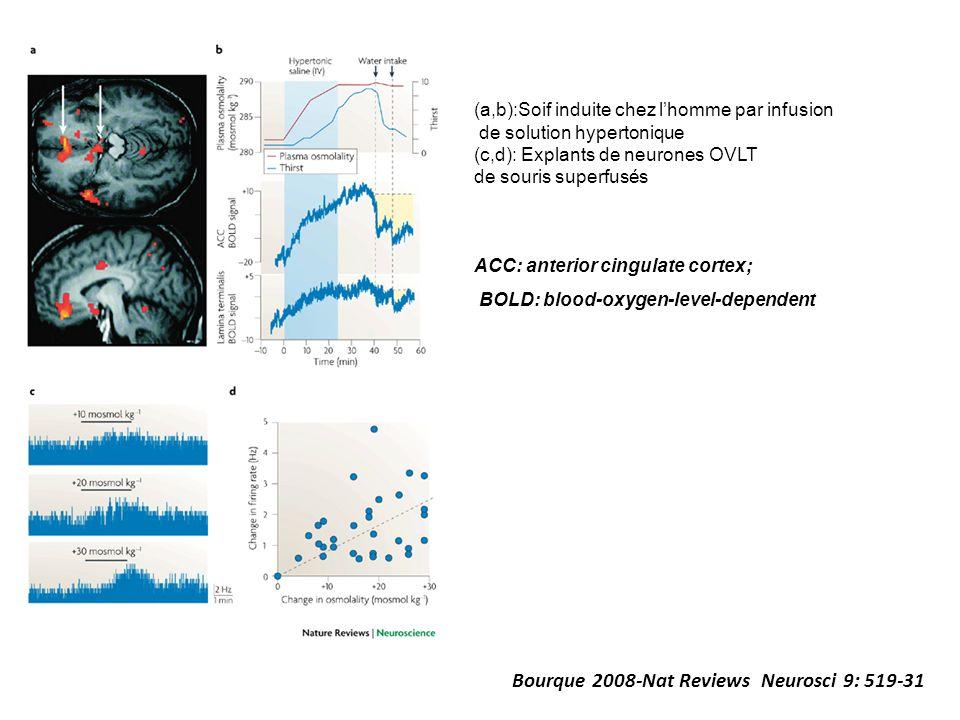 Bourque 2008-Nat Reviews Neurosci 9: 519-31 ACC: anterior cingulate cortex; BOLD: blood-oxygen-level-dependent (a,b):Soif induite chez lhomme par infu