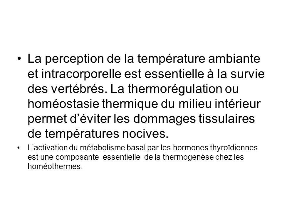 La perception de la température ambiante et intracorporelle est essentielle à la survie des vertébrés. La thermorégulation ou homéostasie thermique du