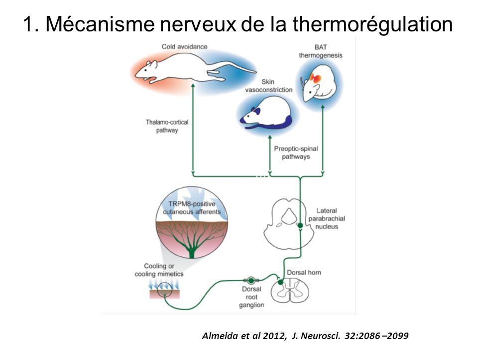 1. Mécanisme nerveux de la thermorégulation Almeida et al 2012, J. Neurosci. 32:2086 –2099