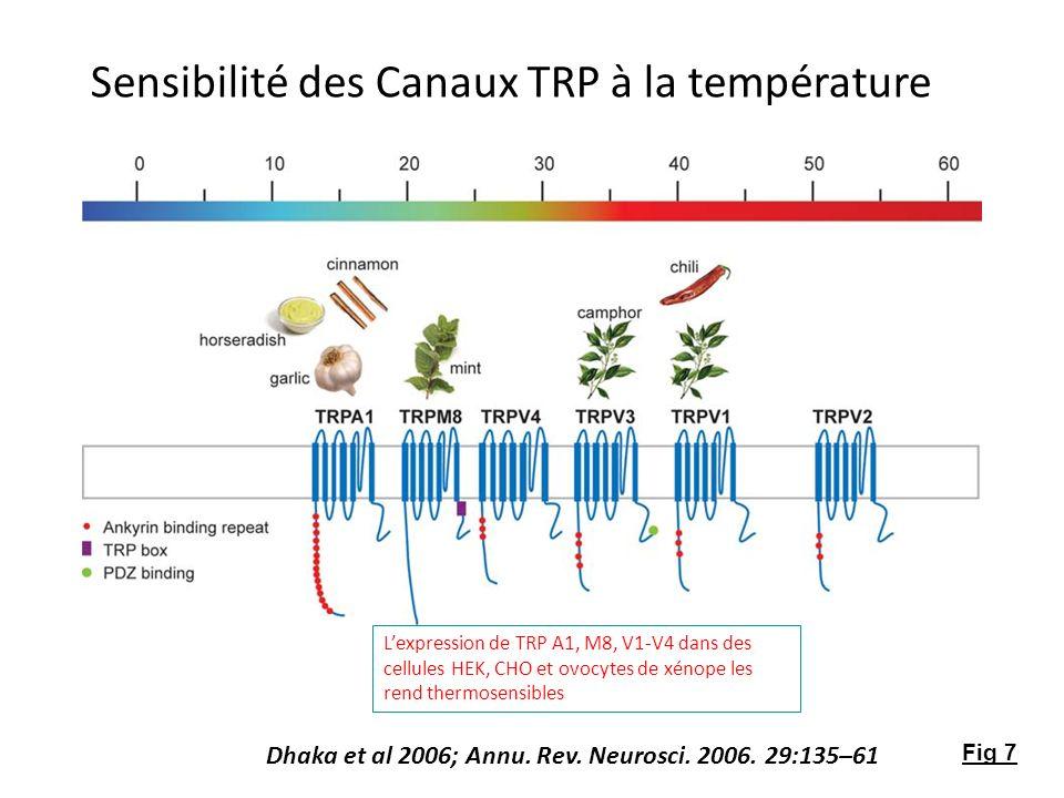Sensibilité des Canaux TRP à la température Dhaka et al 2006; Annu. Rev. Neurosci. 2006. 29:135–61 Lexpression de TRP A1, M8, V1-V4 dans des cellules