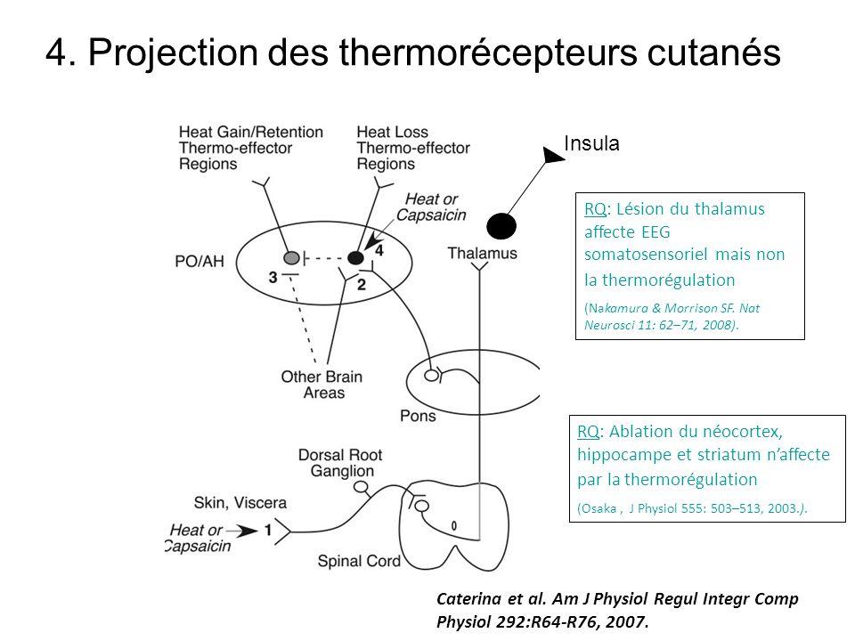 4. Projection des thermorécepteurs cutanés Caterina et al. Am J Physiol Regul Integr Comp Physiol 292:R64-R76, 2007. RQ: Lésion du thalamus affecte EE