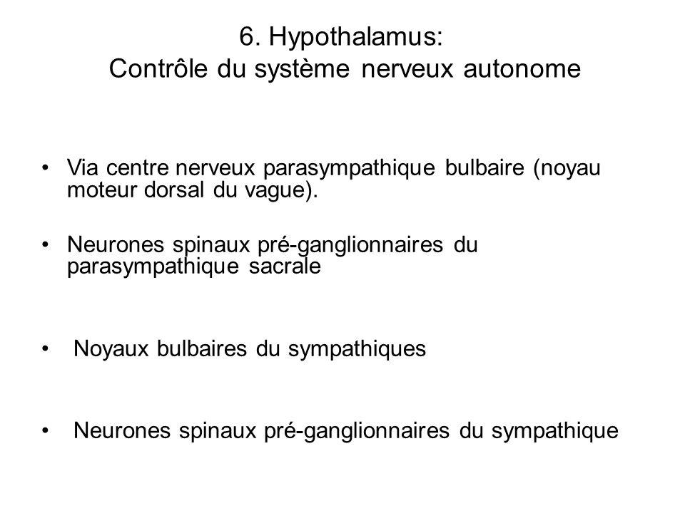 6. Hypothalamus: Contrôle du système nerveux autonome Via centre nerveux parasympathique bulbaire (noyau moteur dorsal du vague). Neurones spinaux pré