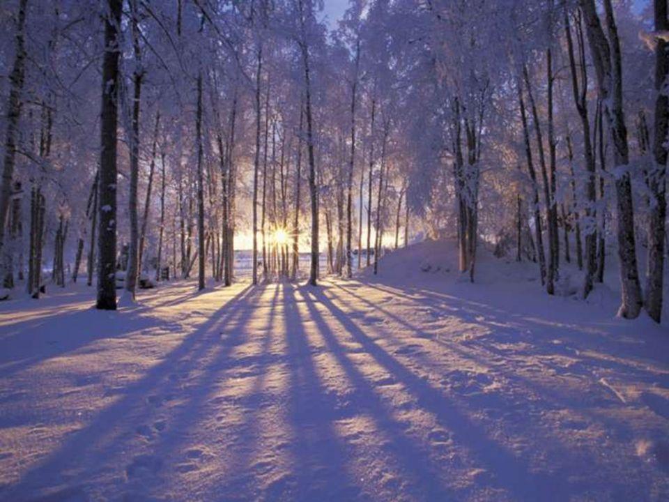 Parfois, j'ai envie que le monde sache, Que j'aime la vie! Que j'adore marcher sous la neige, La pluie, le soleil! Dans les bois parmi la nature, Ente