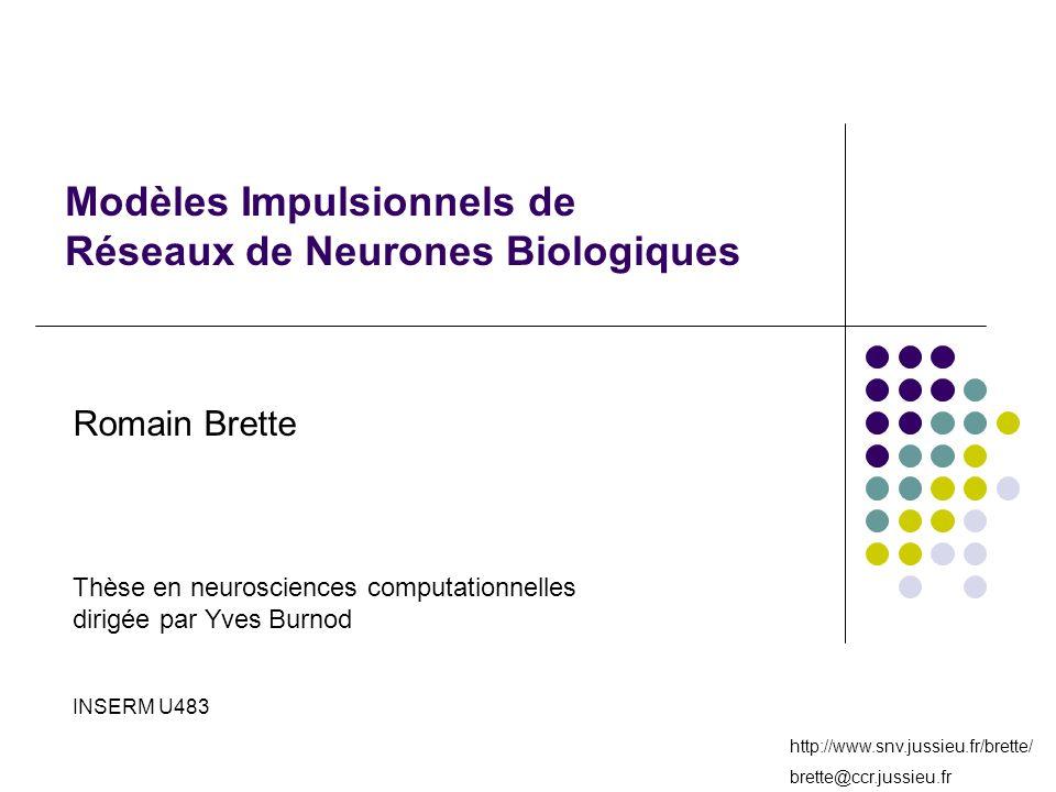 http://www.snv.jussieu.fr/brette/ brette@ccr.jussieu.fr Modèles Impulsionnels de Réseaux de Neurones Biologiques Romain Brette Thèse en neurosciences