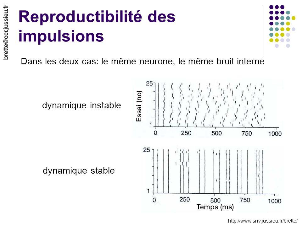 http://www.snv.jussieu.fr/brette/ Reproductibilité des impulsions Dans les deux cas: le même neurone, le même bruit interne dynamique instable dynamiq