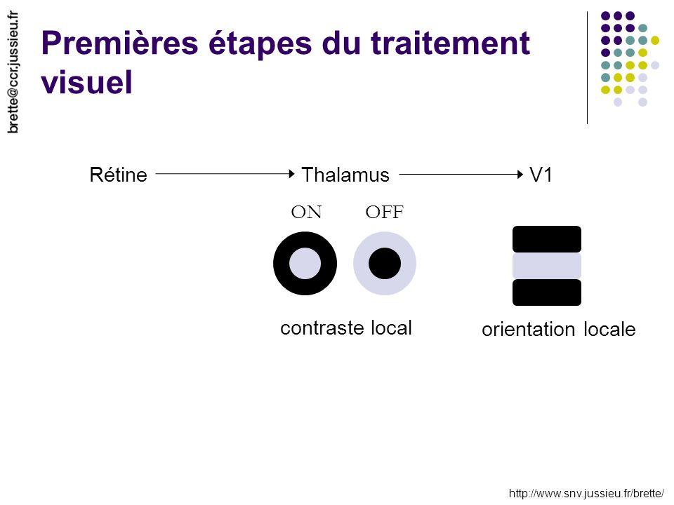 http://www.snv.jussieu.fr/brette/ ThalamusV1 ONOFF contraste local orientation locale Rétine Premières étapes du traitement visuel