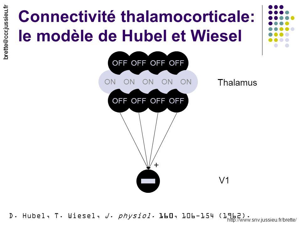 http://www.snv.jussieu.fr/brette/ Connectivité thalamocorticale: le modèle de Hubel et Wiesel ON OFF ON OFF ON OFF ON OFF ON Thalamus V1 + D. Hubel, T