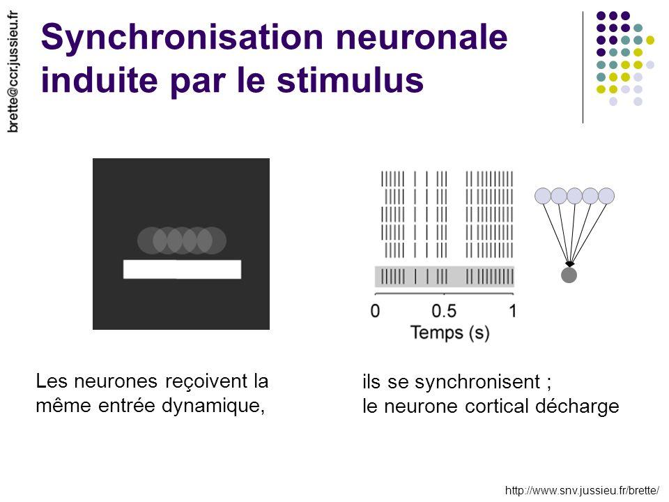 http://www.snv.jussieu.fr/brette/ Synchronisation neuronale induite par le stimulus Les neurones reçoivent la même entrée dynamique, ils se synchronis