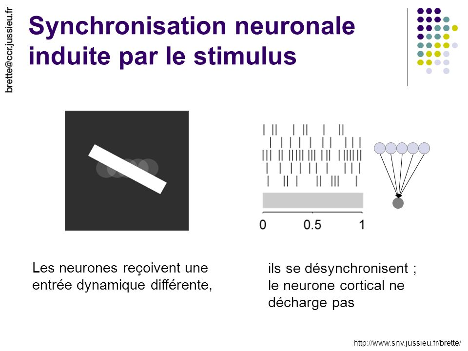 http://www.snv.jussieu.fr/brette/ Synchronisation neuronale induite par le stimulus Les neurones reçoivent une entrée dynamique différente, ils se dés