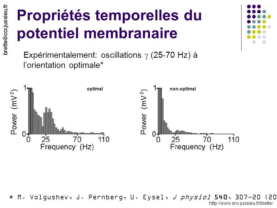 http://www.snv.jussieu.fr/brette/ Propriétés temporelles du potentiel membranaire * M. Volgushev, J. Pernberg, U. Eysel, J physiol 540, 307-20 (2002).