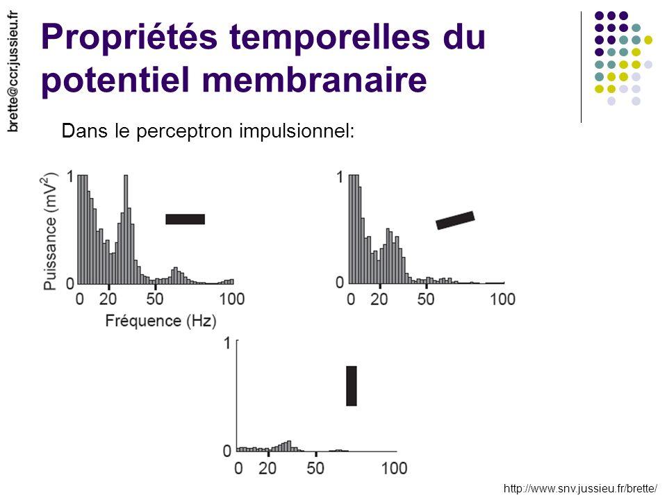 http://www.snv.jussieu.fr/brette/ Propriétés temporelles du potentiel membranaire Dans le perceptron impulsionnel: