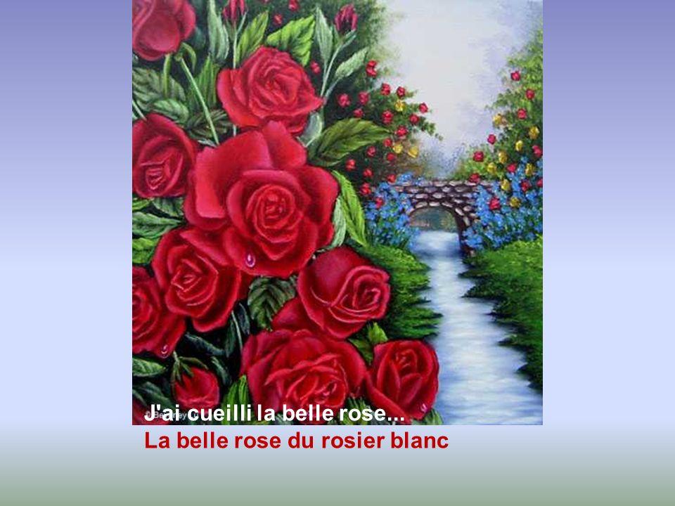 J ai cueilli la belle rose... La belle rose du rosier blanc