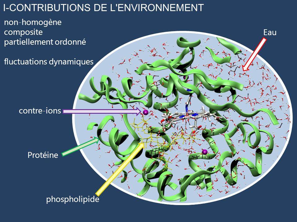 I-CONTRIBUTIONS DE L'ENVIRONNEMENT non-homogène composite partiellement ordonné fluctuations dynamiques Protéine contre-ions phospholipide Eau